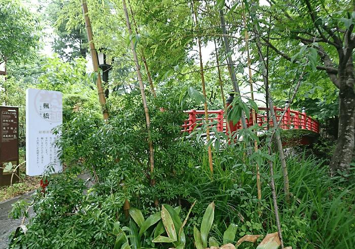 竹林の隙間から見える赤い橋