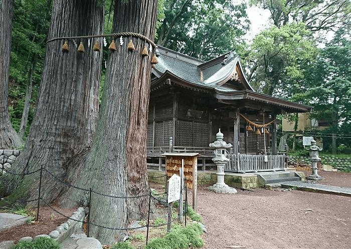 日枝神社の子宝杉