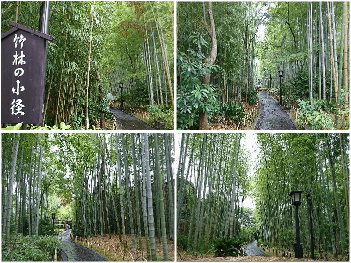 竹林の小径スポット