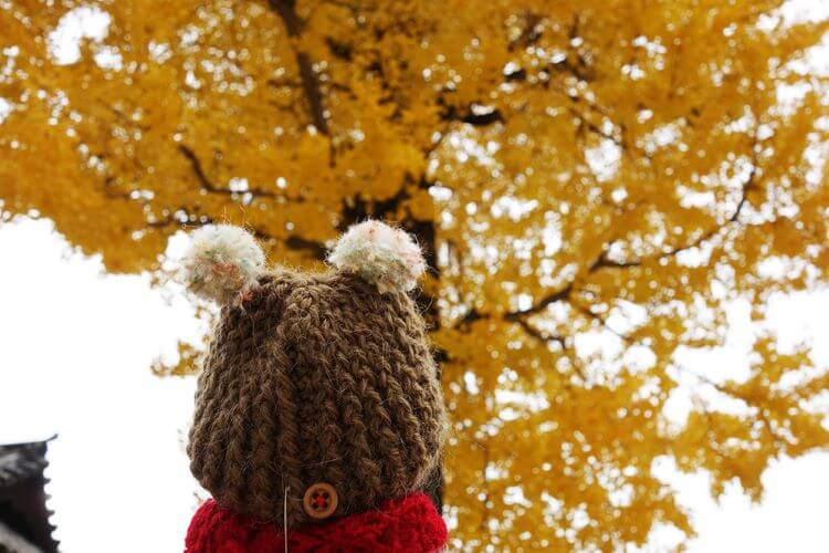クマのぬいぐるみとイチョウの木